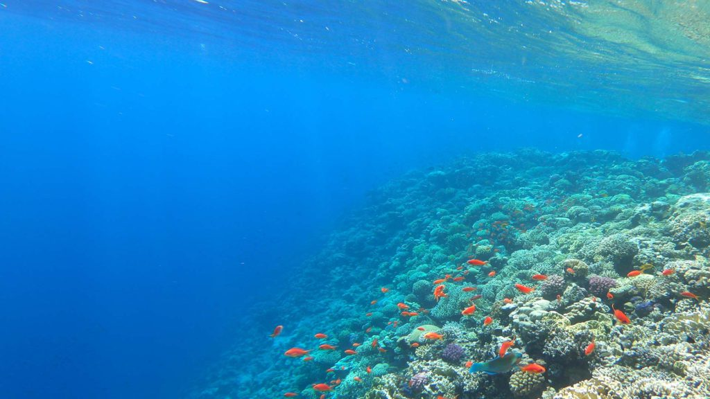 Der Schnorchel-Ausflug wird garantiert das Highlight im Ägypten Urlaub