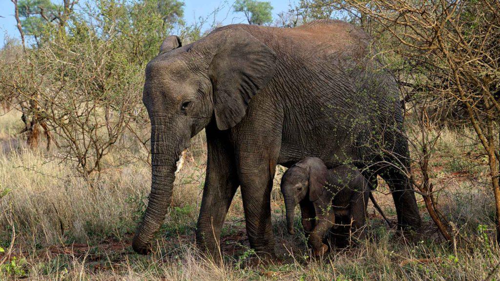 Ein ganz besonderes Erlebnis waren die vielen Tiere im Addo Elephant National Park